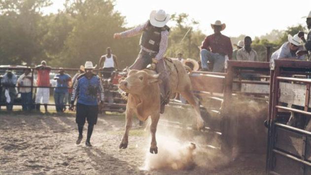 bull-screencomment